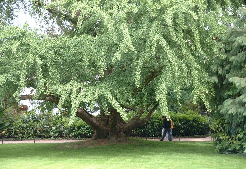 galerie 1 de beaux arbres dans la ville de tours